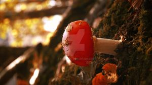 red Cap 3 by kumArts