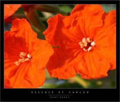 Essence of Cancun by wulfster