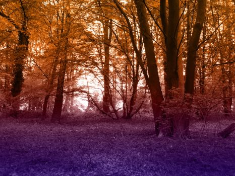 Copper Woods by 888toto