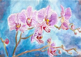 Orchid by emanuelka
