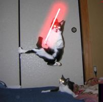 Sith Cat by Narro