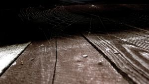 Spiderweb by Maizzi