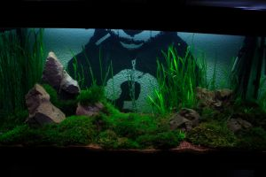 350 liter Aquarium Moss Aquascape by vodoc