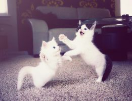 dancing cats by venomxbaby