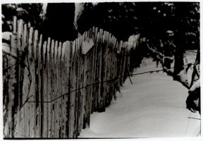 Fence and Wire by thisfleshavenged