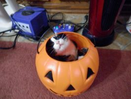 Hey! Halloween is a Cat Holiday, you know... by MidnightMary13