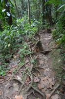 Path of subtropical guadelupian forest by A1Z2E3R