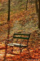 memories of autumn by Iulian-dA-gallery
