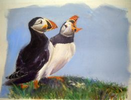 Puffins by Pink-Shimmer