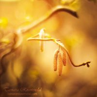 Dangling tails by TammyPhotography