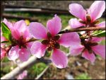 Then it become to a Peach by gatis-vilaks