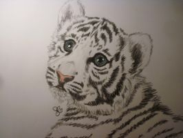 white tiger aww by viveie