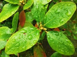 leaves in the rain by HaloReach726