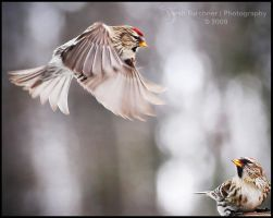 The Pecking Order by Sarah--Lynne