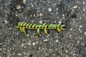 Natural calligraphy by tmt