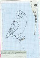 an owl named robin by velvet-underground