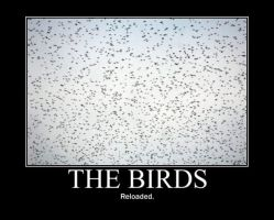 Poster - THE BIRDS by E-n-S
