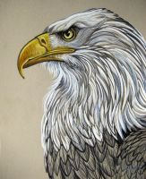 Bald Eagle Regal by HouseofChabrier