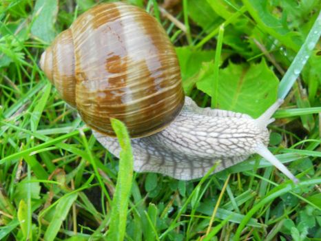 Another snail by ArghmynameisLea