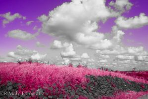 The world is pink! by TLO-Photography