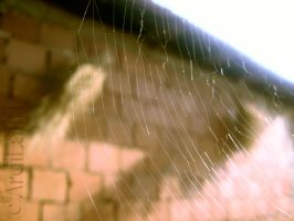SPIDER NET by ArdiLatifi