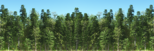 Forest Background by jbjdesigns