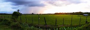 Paddy Field View by zeronemike