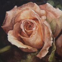 Robs Rose by Fenny2009