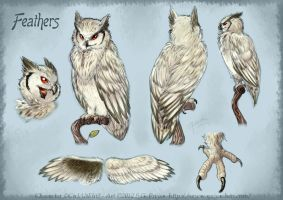 Feathers ref sheet -commission- by Quirachen