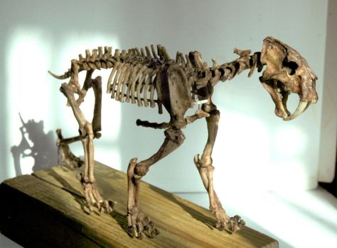 Smilodon1 by hannay1982