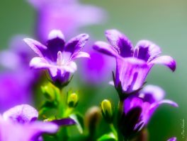 Tender colours 2. by Phototubby