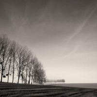 Row of Trees by madvax