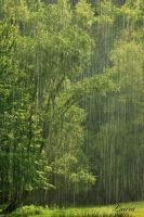small steps to summer - rain by Lk-Photography