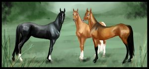 Akhal-teke mares by Percyvelle