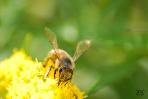 Bee 2 by geeson