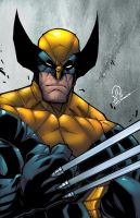 New Wolverine colors copy by JoeyVazquez