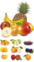 Free Vector Fresh fruits Download by FreeIconsdownload