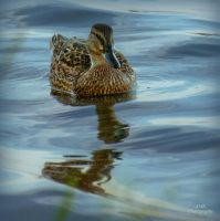 duck tales - double reflection by AnnaxMariaxK
