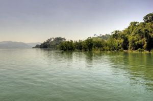 Mangrove by Tschisi