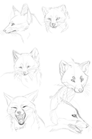 Red fox head practice by Neko-longtail