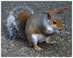 Nuts About Nuts 1 by Forestina-Fotos