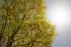 Sun and Tree by jonathanfaulkner