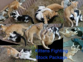 Kitten Fight Stock package by Kiara-Vestigium