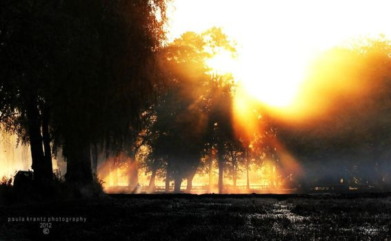 At Dawn by Thilu