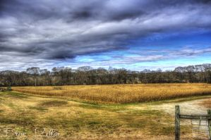 Uncle Shuck's Corn Maze by pureoptic
