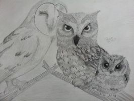 Owls Finished by dailybunny