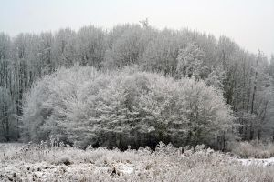 winterland 4 by priesteres-stock
