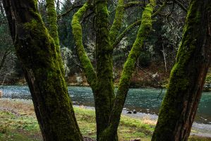 As green as it gets by yuvi2