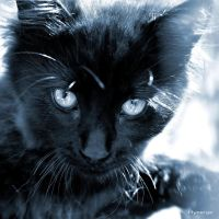Le Chat Bleu II by hyneige