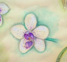 Orchid Study Detail by Kresli